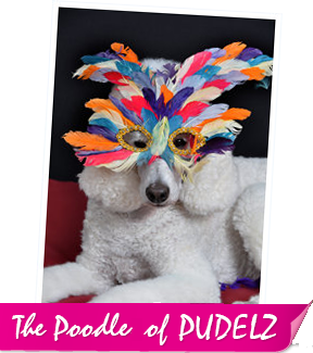 The Poodles of Pudelz