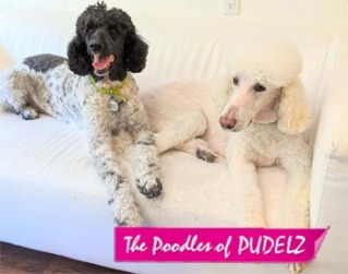 Poodles of Pudelz